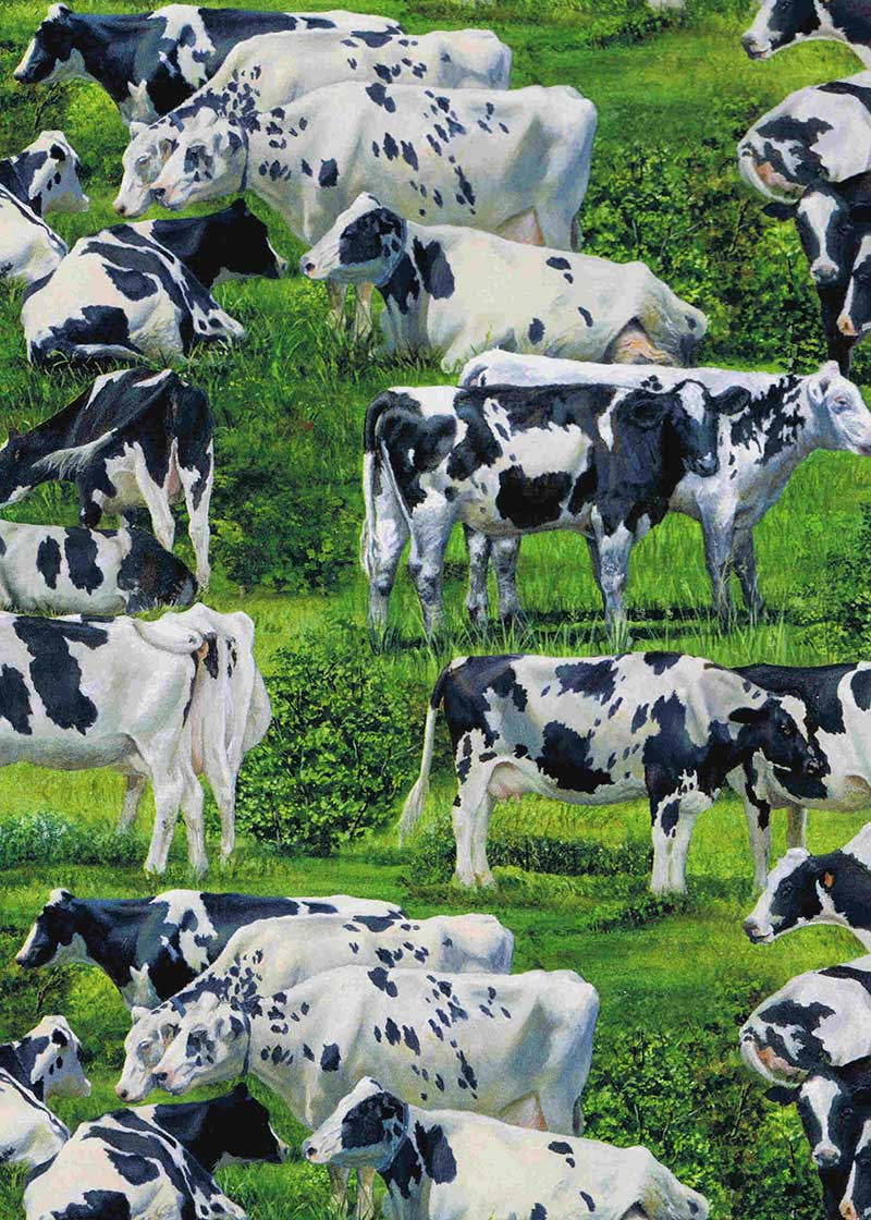 Friesian Cows cow - Click Image to Close