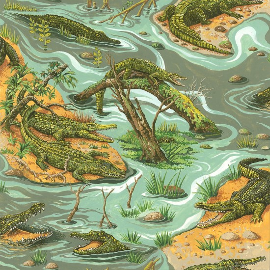 Crocodile crocodiles - Click Image to Close