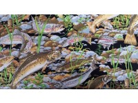 Trout Fish Swimming in the Rocks and Water with Weed