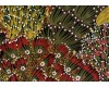 Aboriginal Bush Banana Wide Backing 58/59""