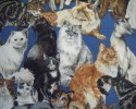 A Toss of Various Breeds of Cats on a Blue Background