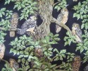 Various Sized and Coloured Owls in Trees on a Black Background