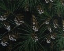 Christmas - Pine Cones and Sprigs of Pine Needles on Green