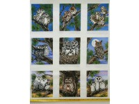 Owls Owl Families in Blocks on White borders