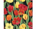 Beautiful red and yellow tulips tulip flowers on black