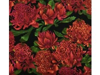 Waratah on Black Waratahs - K