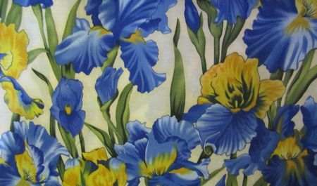 Yellow and Royal Blue Iris on Cream Background