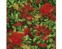 Red Gum Blossoms on Green Background - Coastal Blossom